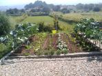 Yavanna - We have an abundant organic vegetable garden. Chose home grown produce!