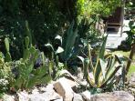 Yavanna - Cactus Garden