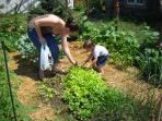 Guests picking fresh lettuce from our quaint settlers garden