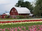 Be sure to check out the Skagit Valley Tulip Festival in April
