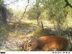 day time buck