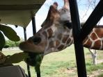Africa Mia Zoo