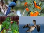 Some of the tropical birds who frequent our property