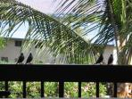 Tropical birds on the lanai
