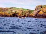 Boat trip to Skomer Island