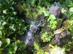 Beautiful water gardens