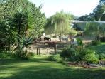 Rangihau Ranch horses