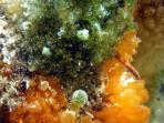 Coral & sponges