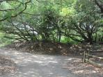 Tree shaded driveway to secluded lot.