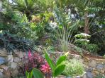 Terraced tropical garden