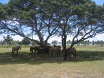 wild horses at Sun Bay