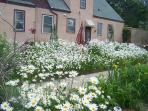 In Spring, Daisies to the Max!