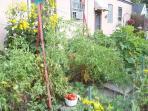 Garden Overgrown!