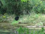 Protected area wildlife.