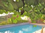 Pool and grapevine
