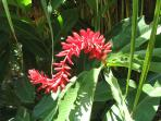 One of many types of flowers at Playa Selva