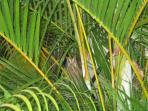 Small owl in palms of Playa Selva