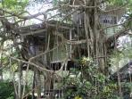 Back of Tree House
