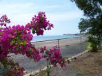 View of beach from garden