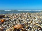 It's not too hard to find some seashells.