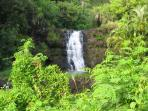 Waimea Falls, which is nearby, offers a scenic, relaxed nature walk in addition to the many hiking trails and beach...