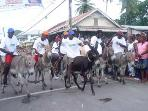 Donkey race at the Carriacou Regatta