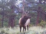One of the Estes 'Locals' hanging out in the front yard