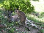 Wildlife in your doorstep