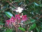 The garden is full of exotic tropical flowers and trees
