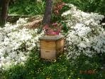 Honeybees help with the edible landscape below the deck