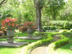 Tropical garden of 3.000 m2 with lots of birds