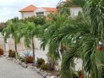 Palm tree lined driveway