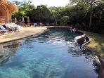 Resort's tropical infinity pool.