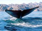 Wonderful Whale Watching