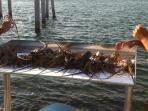 Lobster season