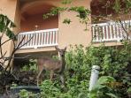 Deer behind Villa