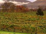 Nearby: Shenandoah Vineyards - Wine from the oldest winery in Virginia's Shenandoah Valley.