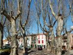 Plane trees in the square at Millas, a few kilometres away