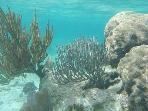 Snorkeling right off our beach!