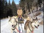 Dogsled ride in the Absoroka Mountains near Chico Hot Springs