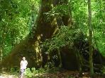 Jurassic Park Trees