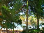 From your own private verandah look straight out onto the coconut palm fringed beach right in front