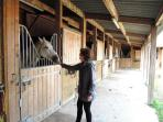 Horse riding in Villers: stables
