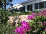 Garden, plants, Villa Ida, Milna Brac Island