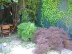 Japanese Maples in New York City? Yes ;)