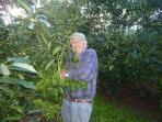 Avocado orchard with owner