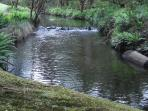 Barrington Tops - a must see