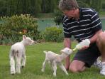 Host John feeding our little pet lambs. Guest often help here.