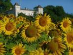 Sunflowers around Touffailles village
