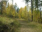 Our property is bordered on two sides by Forest Service land for plenty of privacy.